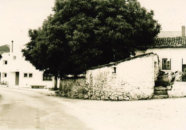 Nogueira Grande no Largo do Posto Médico Palheiro velho em pedra e degraus em pedra