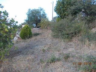 Jardim Padre manuel Ferreira