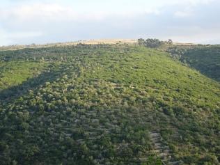 Serra galega
